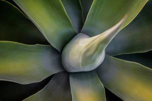 Cactus by DeadLetterDesign