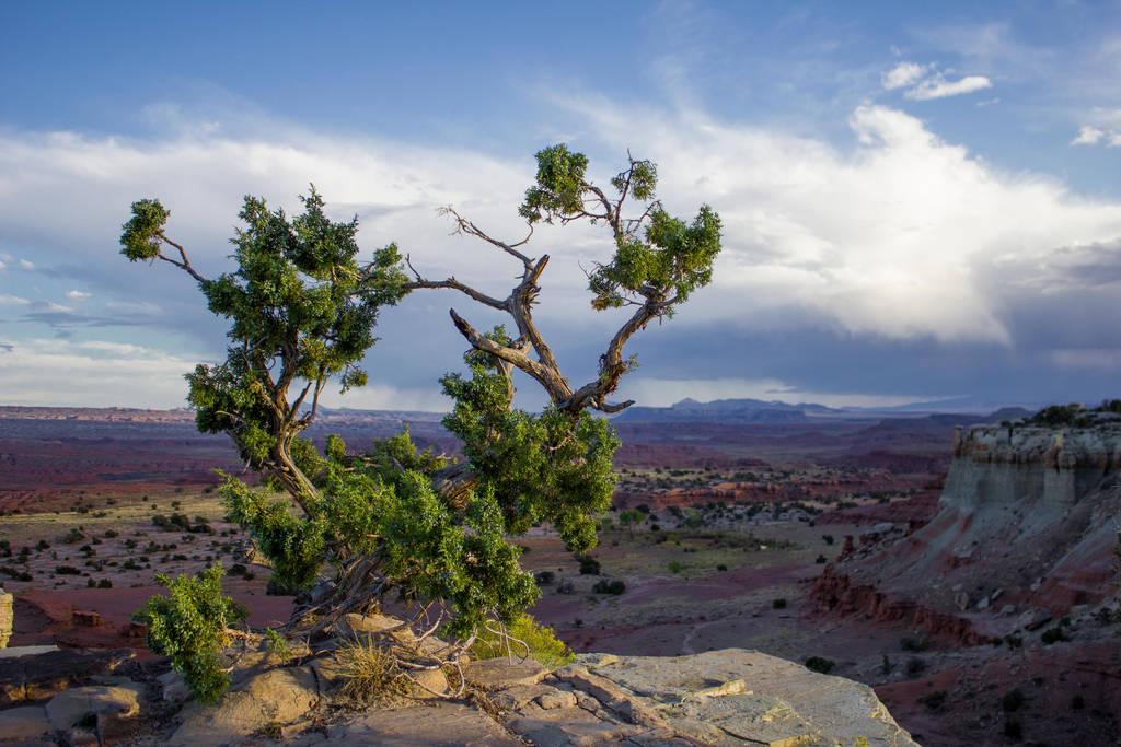 Desert Tree by DeadLetterDesign