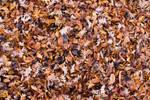 Leaves by DeadLetterDesign