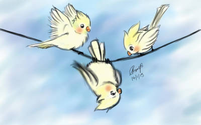 The three cockatiels by MariaChrystal