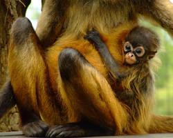 Baby Monkey by PrimalOrB