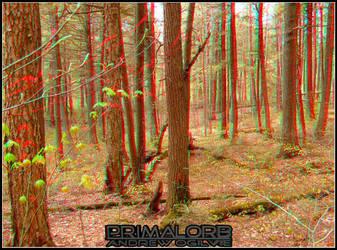 Algonquin Forest 3D by PrimalOrB