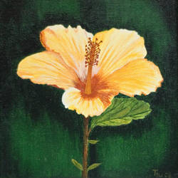 yellow hibiscus by from-art-to-art
