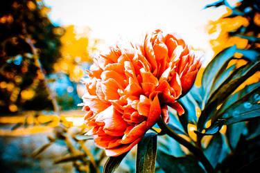 Orange by degodson
