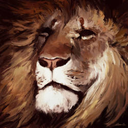 Lion-sketch-123 by MatteoAscente