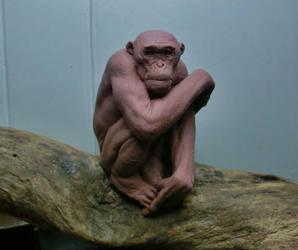 Chimp on a tree log. by BOULARIS