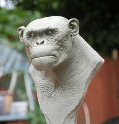 ape bust by BOULARIS