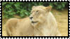 Lioness Stamp by Gin-No