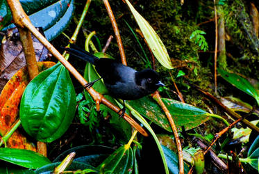 Costa Rica - Bird 3 by LLukeBE