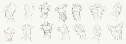 Anatomy Challenge, Part 01 - Body by AzizlaSwiftwind