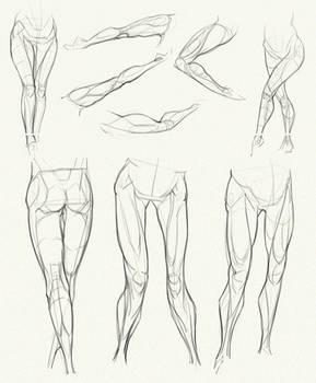 Anatomy Challenge, Part 04 - Legs by AzizlaSwiftwind