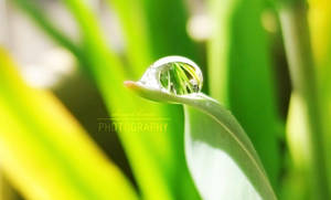 Drop of Life by danni-louise