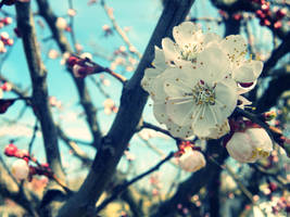 Spring fruits 2 by Songofmyself6