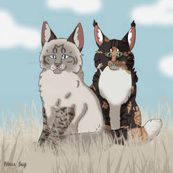 New leadership WindClan by Wolfskull1996