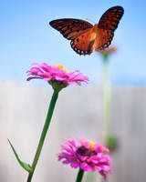 Butterfly in Flight by existentialdefiance