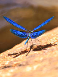 Spread Your Wings by Cellshots