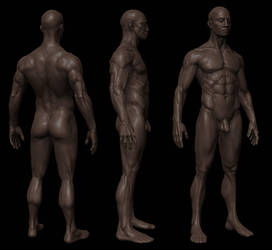 Anatomy study ZB3 shot 2 by mojette