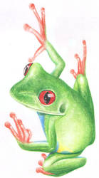 Tree frog by squanpie
