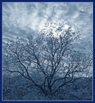Tree silhouette. IRP1010954, with story by harrietsfriend