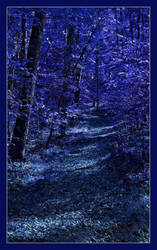 Night's forest path. L1070022, with story by harrietsfriend
