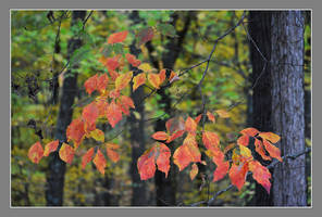 Late season leaves. 800-3027, with story by harrietsfriend