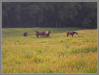 Horses in field. DSCN0722, with story by harrietsfriend