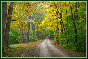 Follow me forest road. L1000894, with story by harrietsfriend