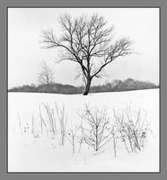 Winter tree. img670, with story by harrietsfriend