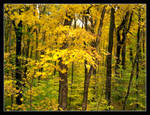 Yellow season. L1001118, with story by harrietsfriend