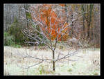 Changing seasons, iced tree. L1001164, with story by harrietsfriend