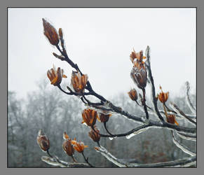 Ice storm. DSCN0824, with story by harrietsfriend