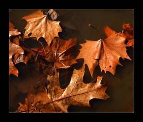 Fallen leaves. DSCN0833, with story by harrietsfriend