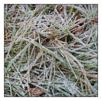 Grass within ice. DSCN0819, with story by harrietsfriend