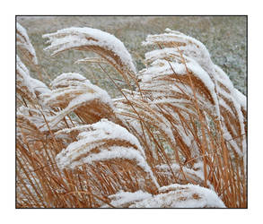 Snow on grasses. DSCN3886, with story by harrietsfriend