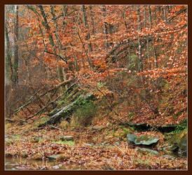 Fallen trees. L1001221, with story by harrietsfriend