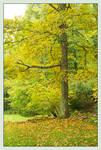 Roadside tree. L1000751, with story by harrietsfriend