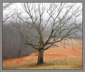 Winter tree. DSCN4346, with stories by harrietsfriend