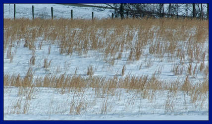 Winter grasses. L1001341, with story by harrietsfriend