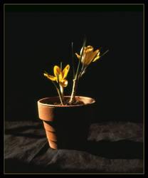Flower Pot.c 1970.imgs477da by harrietsfriend