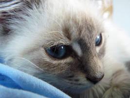 My cute little cat by Shiina-Sempai