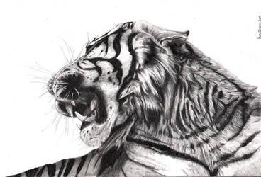 Blood Trail - The Tiger by Edryn83