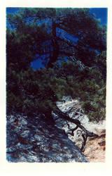 evergreen by andrewpershin