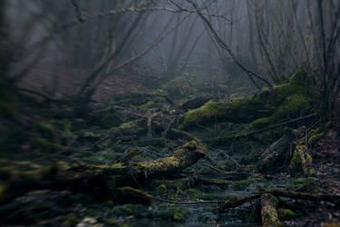 foggy deep by andrewpershin