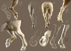 Horse Limb Studies by ColossalBeltloop