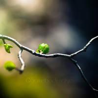 Petit Vert by Somebody--else