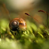 Little Snail . V by Somebody--else