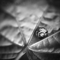 L'escargot. by Somebody--else