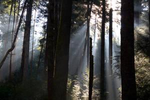 Light Forest by Kekilen