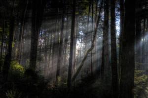 Light Forest II by Kekilen