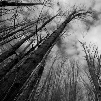 Winter Maples 2 by Kekilen
